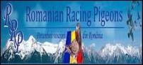 Romanian racing pigeons